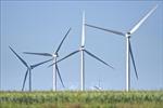 Trao quyết định chủ trương đầu tư cho 2 dự án nhà máy điện gió tại Tiền Giang