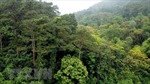 Quảng Bình: 3 người tử vong, 3 người mất tích khi đi rừng