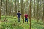 Yên Bái lan tỏa phong trào trồng rừng