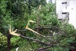 Quảng Nam có gió to và mưa lớn từ 150 - 300 mm, hàng loạt cây xanh bị gãy đổ