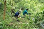Nghiên cứu, hoàn thiện chính sách phát triển rừng gỗ lớn