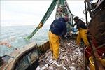 Telegraph: EU sẵn sàng nhượng bộ về quyền đánh bắt cá trong đàm phán Brexit