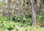 Quản lý bền vững rừng phòng hộ - Bài cuối: Hướng phát triển