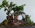 Kỷ lục gia thế giới về bonsai mini thổi hồn vào thiên nhiên