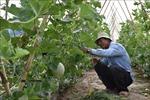 Nông dân thấp thỏm mùa dưa Tết