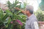 Người trồng hoa lan vụ Tết ở Bà Rịa-Vũng Tàu gặp khó