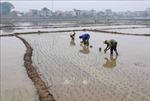 Hà Nội còn 1.100 ha gieo cấy cần nước từ các hồ chứa thủy điện