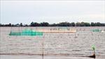 Sơ kết Nghị quyết 120 về phát triển bền vững Đồng bằng sông Cửu Long