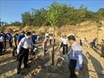 Giai đoạn 2021-2025, Bình Định phấn đấu trồng 11 triệu cây xanh