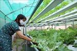 Ngày Khoa học và Công nghệ Việt Nam 18/5: Khi 'dân công nghệ' đi làm nông