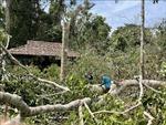 Dông, lốc làm gãy đổ hàng loạt cây rừng tại Khu Di tích lịch sử Trung ương Cục miền Nam