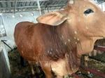 Hà Nội: Kiểm soát dịch bệnh trên đàn gia súc gia cầm