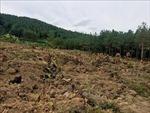 Thu hồi gần 70.000 m2 đất trồng rừng bị lấn chiếm trái phép ở Đắk Nông
