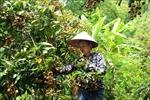 'Luồng xanh' tạo thuận lợi cho vận tải hàng hóa, nông sản ở Sơn La