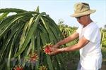 Linh hoạt tiêu thụ hàng hóa, nông sản cho dân
