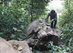 Gian nan bài toán giữ rừng ở vùng cao Nà Nhạn, Điện Biên