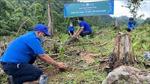 Góp sức trẻ phục hồi rừng đầu nguồn