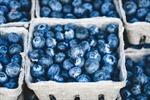Tháng bệnh Alzheimer Thế giới: Đừng quên chăm sóc sức khỏe tâm trí bằng trái việt quất