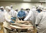 'Thẻ vàng' IUU làm thay đổi nhận thức về phát triển nghề cá