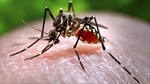 Quốc gia Trung Mỹ đầu tiên 'xóa sổ'bệnh sốt rét