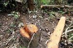 Đóng cửa rừng tự nhiên là một chủ trương lớn, vừa cấp bách, vừa lâu dài