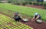 Lào Cai: Nâng cao chất lượng cuộc sống, giữ chân phụ nữ ở lại với làng