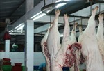 Thịt lợn nhiễm sán gạo tại Bảo Thắng (Lào Cai) là tin thất thiệt