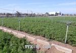 Ứng dụng công nghệ tưới tiết kiệm để phát triển bền vững nông thôn