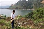 Hòa Bình: Điều tra vụ 200 cây sưa đỏ của người dân bị chặt phá