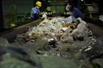 G20 nhất trí thiết lập một khuôn khổ quốc tế để giảm rác thải nhựa