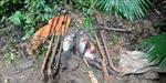 Gần 14 năm tù cho các đối tượng săn bắn Voọc xám quý hiếm