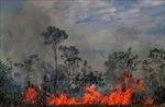 Rừng Amazon vẫn cháy âm ỉ