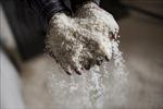 Hỗ trợ hơn 1.300 tấn gạo cho người dân Khánh Hòa thiếu đói do hạn hán
