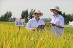 An Giang đi đầu về xã hội hóa giống lúa