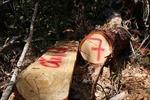 Thực hiện đóng cửa rừng tự nhiên - Bài 4: Tháo gỡ vướng mắc, sử dụng đúng mục đích quỹ đất nông, lâm trường