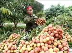 Thúc đẩy tiêu thụ hàng nông sản sang thị trường Trung Quốc