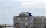Long An quy định khu vực nội thành không được phép nuôi chim yến
