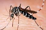 Lào ghi nhận trên 4.250 ca mắc, 9 ca tử vong do sốt xuất huyết
