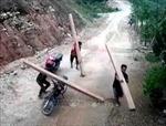 Quảng Ngãi yêu cầu kiểm tra, xử lý tình trạng khai thác gỗ trái phép tại huyện Ba Tơ