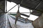 Bình Dương: Lốc xoáy làm ba người bị thương, khoảng 250 căn nhà tốc mái