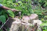 Vụ mở đường phá rừng giáp ranh tại Phú Yên: Quy mô thực tế lớn hơn so với báo cáo