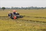Thêm gam màu sáng cho bức tranh cây lúa Tiền Giang