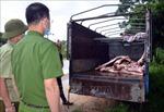 Phát hiện vụ vận chuyển gần 1 tấn lợn và thịt lợn mắc dịch tả lợn châu Phi