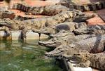 Hoàn thiện pháp luật bảo vệ động vật hoang dã - Bài 1: 'Lợi bất cập hại' ở các cơ sở nuôi nhốt