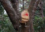 Tạm đình chỉ công tác Giám đốc Ban Quản lý rừng Di tích lịch sử và Cảnh quan môi trường Mường Phăng