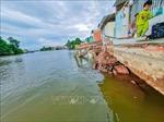 Cần Thơ dự kiến cần hơn 530 tỷđồng xây kè chống sạt lở sông Trà Nóc