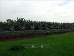U Minh Thượng phát triển nông nghiệp theo hướng hữu cơ