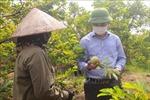 Nhiều giải pháp giúp lưu thông, tiêu thụ na dai Đông Triều