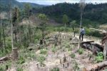 Điều tra 'điểm nóng' phá rừng Ea Rớt