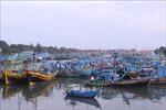 Tạm dừng khai thác hải sản tại một số phường, xã ở TP Phan Thiết